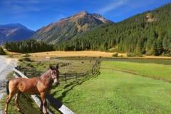 Landelijke die omheining van logboeken wordt gemaakt Royalty-vrije Stock Foto
