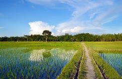Landelijke en groene gewassengebieden en stegen stock foto's