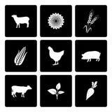 Landelijke geplaatste pictogrammen Stock Foto's