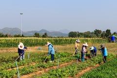 Landelijke landbouwers Royalty-vrije Stock Foto's