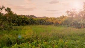 Landelijke landschapsgebied en gras met zonlicht en berg in de ochtend van de zonneschijndag Stock Fotografie