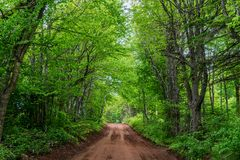 Landelijke Prins Edward Island Forest Road Royalty-vrije Stock Foto
