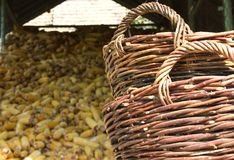 Landelijke scène 3 Royalty-vrije Stock Afbeelding