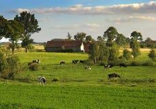 Landelijke scène Stock Foto's