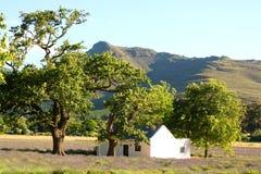 Landelijke scène met lavendelgebied, Zuid-Afrika Royalty-vrije Stock Foto