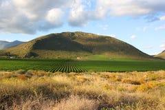 Landelijke scène, Route 62, Zuid-Afrika Stock Afbeelding