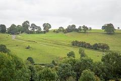 Landelijke scène van groene gebieden en hagen en bomen Stock Foto's