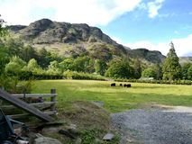Landelijke scène van schapen op gebied met erachter berg Royalty-vrije Stock Foto's