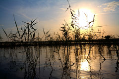 Landelijke vijver bij zonsondergang Stock Foto's