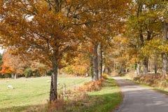 Landelijke weg in Creuse Limousin Frankrijk in de herfst met kleurrijke fal Royalty-vrije Stock Foto