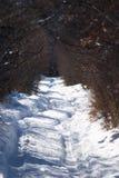 Landelijke weg in de winterbos stock afbeelding