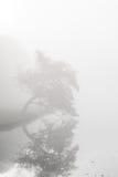 Landelijke weg die het de herfstpark doornemen op een nevelige ochtend Royalty-vrije Stock Fotografie