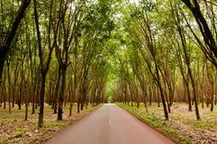 Landelijke weg door Groene Weelderige Paragraaf-rubberboomaanplanting in sou Stock Afbeeldingen