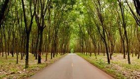 Landelijke weg door Groene Weelderige Paragraaf-rubberboomaanplanting in sou Royalty-vrije Stock Foto