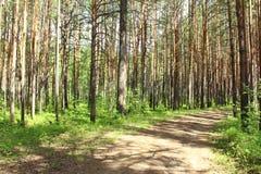 Landelijke weg in het bos Stock Foto