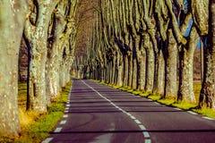 Landelijke weg met hoge bomen aan beide kanten Royalty-vrije Stock Fotografie