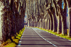 Landelijke weg met hoge bomen aan beide kanten Stock Foto's