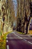Landelijke weg met hoge bomen aan beide kanten Stock Fotografie