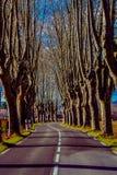 Landelijke weg met hoge bomen aan beide kanten Royalty-vrije Stock Afbeeldingen