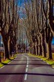 Landelijke weg met hoge bomen aan beide kanten Royalty-vrije Stock Foto's