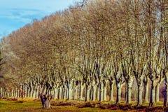 Landelijke weg met hoge bomen aan beide kanten Stock Foto
