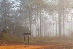 Landelijke weg met mistig milieu Stock Fotografie