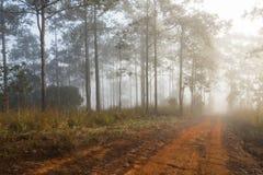 Landelijke weg met mistig milieu royalty-vrije stock foto's