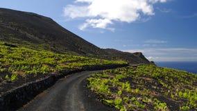 Landelijke weg onder de wijndruif. Het Eiland van La Palma Royalty-vrije Stock Afbeeldingen