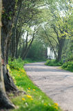 Landelijke weg op de lenteochtend stock foto