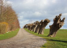 Landelijke Windy Road met Lijn van Oude Willow Trees Stock Foto's
