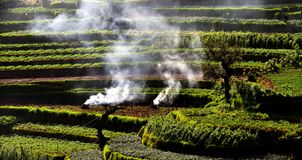 Landen Sie Reinigung von avattavada, munnar, grünes Kerala lizenzfreies stockfoto