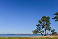 Landes pine on of a lake Royalty Free Stock Photo