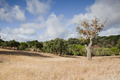 Landescape of Alentejo Royalty Free Stock Photography