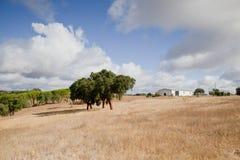 Landescape of Alentejo Stock Images