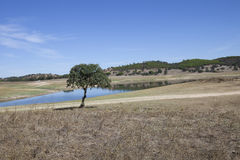 Landescape of Alentejo Stock Photos