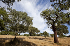 Landescape of Alentejo Stock Images
