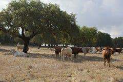 Landescape of Alentejo Royalty Free Stock Photography