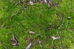 Landet i skogen täckas med mossa royaltyfri fotografi