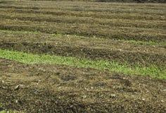 Landfeld für die Landwirtschaft Lizenzfreies Stockbild