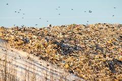 landfill Royaltyfri Bild