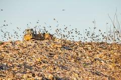 landfill Arkivbild