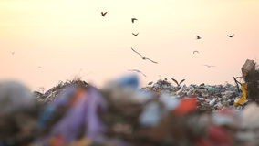 Landfill and birds. Panorama. Landfill and birds at sunset. Panorama landfill. HD1080 stock video footage