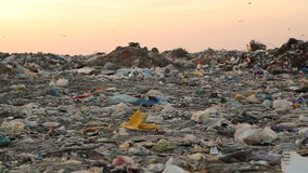 Landfill and birds at sunset. Panorama landfill stock footage