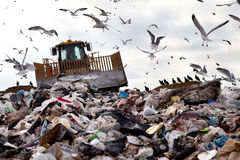 Landfill with birds. Truck working in landfill with birds in the sky Royalty Free Stock Images