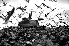 Landfill and birds. Truck working in landfill with birds in the sky Royalty Free Stock Photography