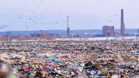 Landfill site with piles of garbage, flock of scavenging birds on background. 4K stock footage