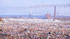 Landfill site with piles of garbage, flock of scavenging birds on background. 4K stock video footage