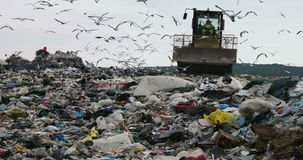 Landfill site. Truck flattening household garbage on a landfill waste site stock video
