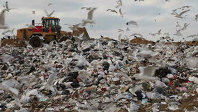 Landfill. Truck flattening trash in landfill with birds looking for food stock video footage