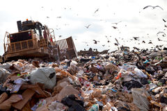 Landfill truck in trash. Truck working in landfill with birds looking for food Stock Image